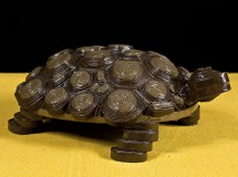 A_077a_tartaruga copy
